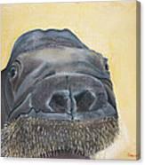 Smooshi Canvas Print