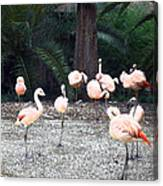 Smudgestick Flamingos Canvas Print