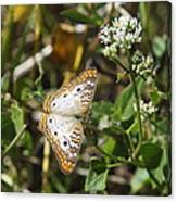 Snack For A White Peacock Butterfly Canvas Print