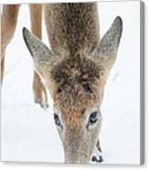Snacking Deer Canvas Print