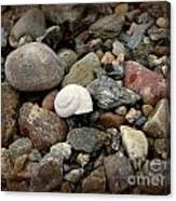 Snail Among The Rocks Canvas Print