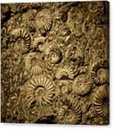 Snail Fossil Canvas Print