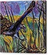 Snail Kite Canvas Print