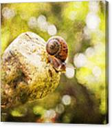 Snail Of A Time Canvas Print