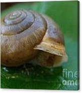 Snail On Leaf Canvas Print