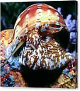 Snails 1 Canvas Print