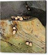 Snails Converge Canvas Print