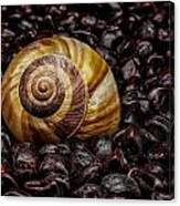 Snailshell In Tamarind Bed Canvas Print