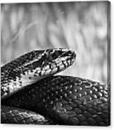 Snake In Black And White Canvas Print