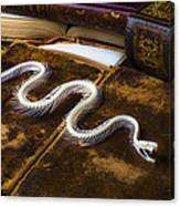 Snake Skeleton And Old Books Canvas Print