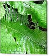 Snake Skin Plant Canvas Print