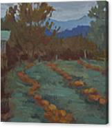 Snohomish Pumpkin Patch Canvas Print