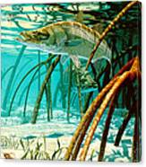 Snook In The Mangroves Canvas Print