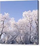 Snow And Ice Blanket Cottonwood Trees Canvas Print