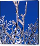 Snow And Ice Coated Branches Canvas Print