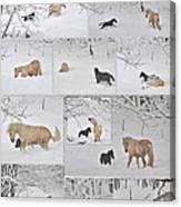 Snow Angels Paso Fino Style Canvas Print