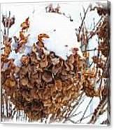 Snow Bonnet Canvas Print