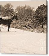 Snow Bound Horse Canvas Print