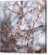 Snow Branch Canvas Print