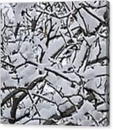 Snow Branches 2-1-15 Canvas Print