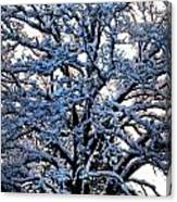 Snow Bright Canvas Print
