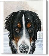 Snow Bumper Canvas Print