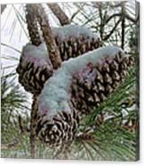 Snow Cones Canvas Print