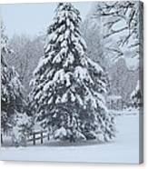 Snow Conifer 2-1-15 Canvas Print