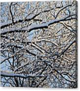Snow Covered Branches 2 Canvas Print