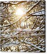 Snow Covered Branches Canvas Print