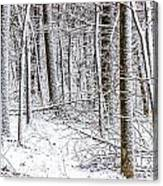 Snow Covered Forest 4 Canvas Print