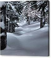 Snow Covered Trail Canvas Print