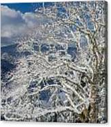 Snow Covered Tree And Winter Scene Canvas Print