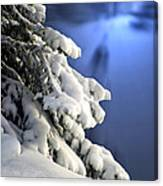 Snow Covered Tree Branches Canvas Print
