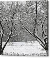 Snow Covered Trees In A Field. Canvas Print