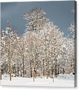 Snow Covered Trees In The Forest In Winter Canvas Print