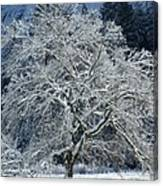 Snow Covered Winter Canvas Print
