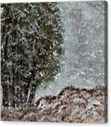 Snow Day II Canvas Print
