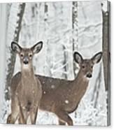 Snow Deer Canvas Print