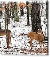 Snow Doe's 1 Canvas Print