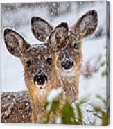 Snow Does Canvas Print