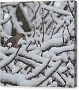 Snow Dove Canvas Print