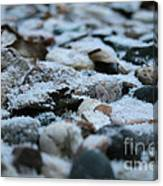 Snow Dusted Canvas Print