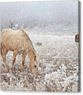 Snow Falling On Horses Canvas Print