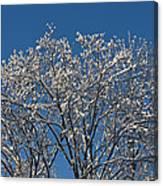 Snow Fan Canvas Print