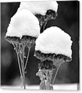 Snow Flowers Bw Canvas Print