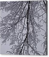 Snow Frosted Branches Canvas Print