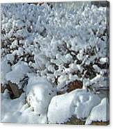 Snow Frosted Bush Canvas Print