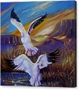 Snow Geese Canvas Print