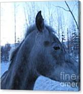Snow Horse Whisperer  Canvas Print